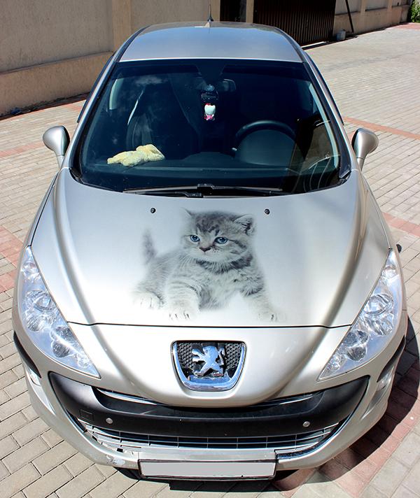 Котенок на капоте